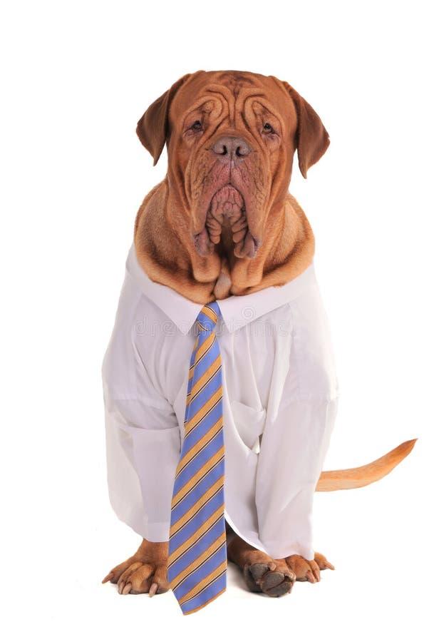 собака дела стоковое фото rf