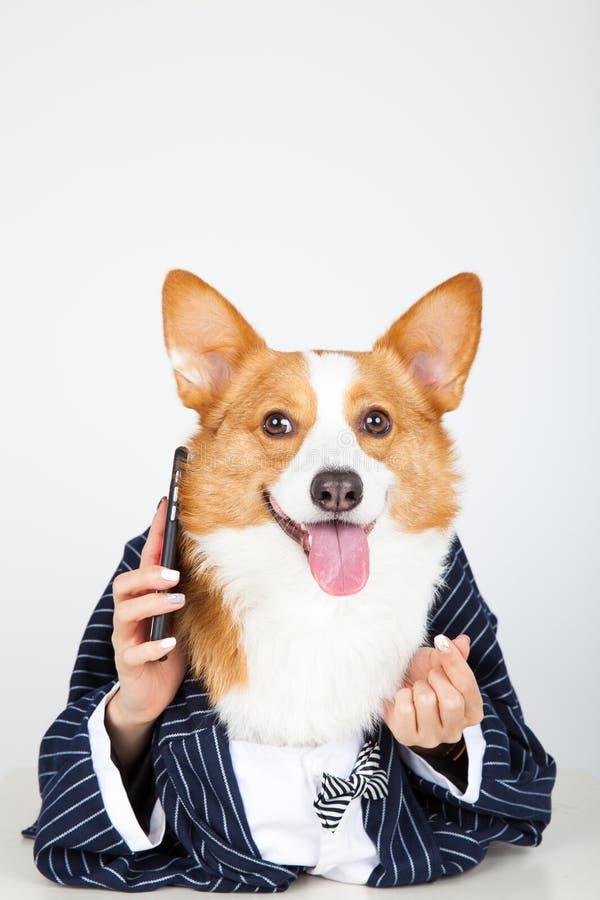 Собака делового костюма проводя iphone вызывать стоковые фотографии rf