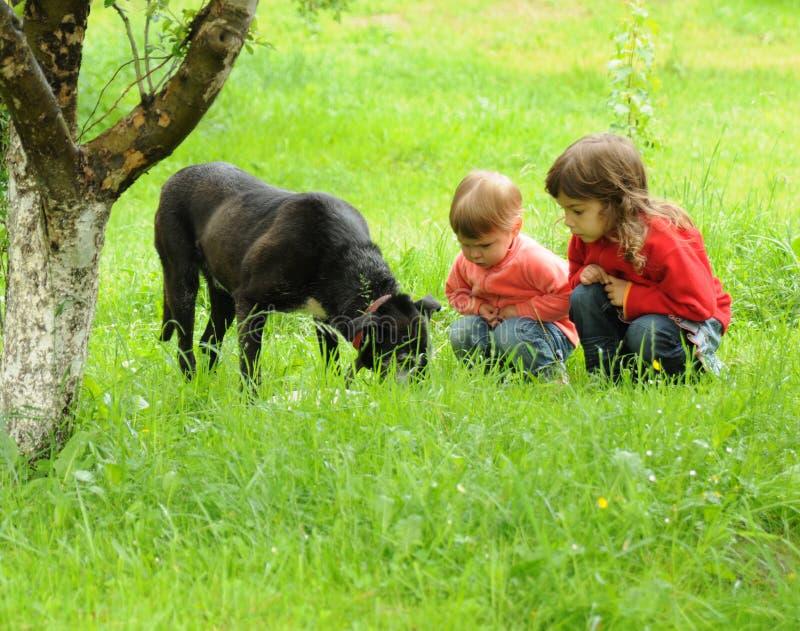 собака детей стоковое фото rf