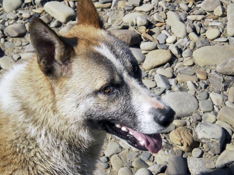 Собака домашнее животное стоковые изображения