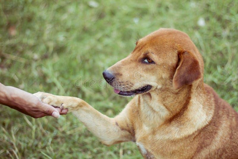 Собака достигает для его ног для того чтобы касаться его ногам стоковое фото rf