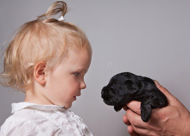 Собака девушки и щенка наблюдая на одине другого стоковое изображение