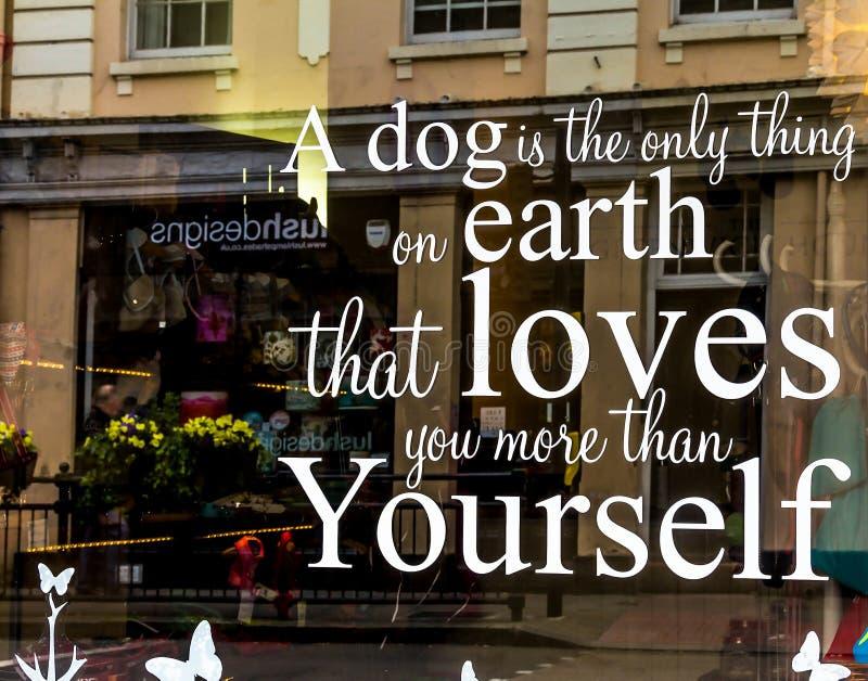 Собака единственная вещь на земле которая влюбленности вы себя больше чем стоковое изображение