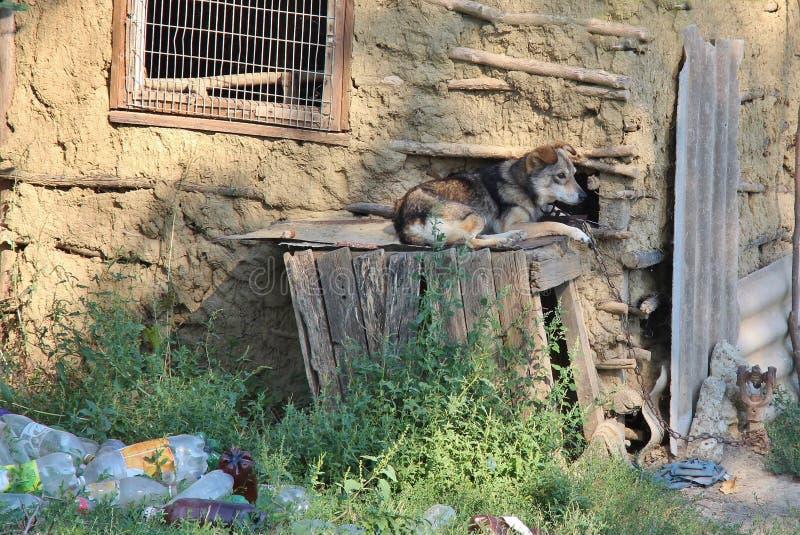 Собака лежа на деревянной коробке стоковое изображение