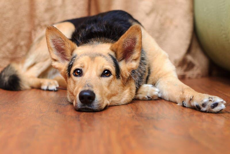 Собака лежа на поле стоковое фото