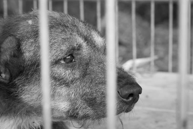 Собака жалости старая стоковые фото