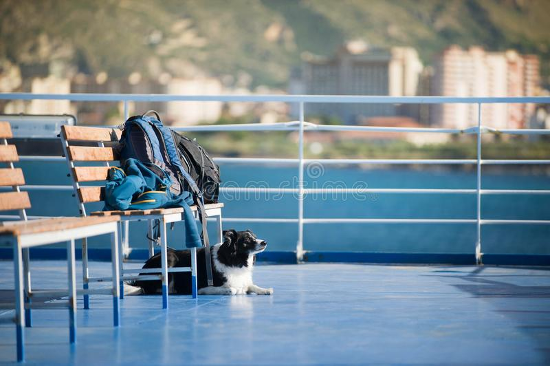 Собака ждать багаж на пароме входя в гавань Черно-белая Коллиа границы стоковые фото