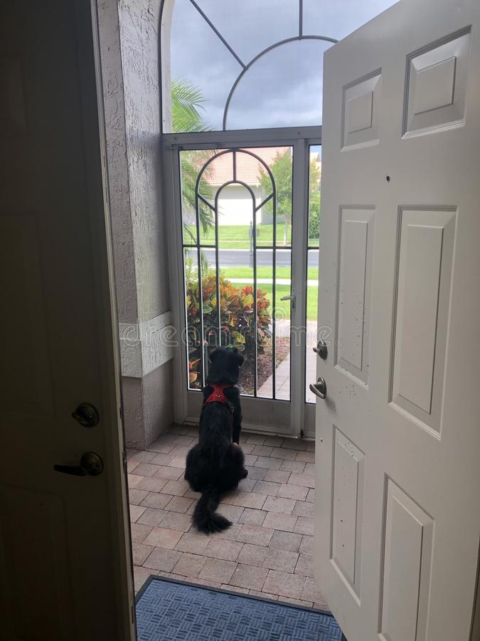 Собака ждать владельца стоковое изображение rf