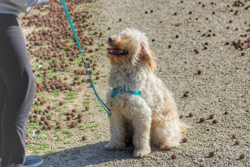 Собака ждать со своим владельцем стоковое фото