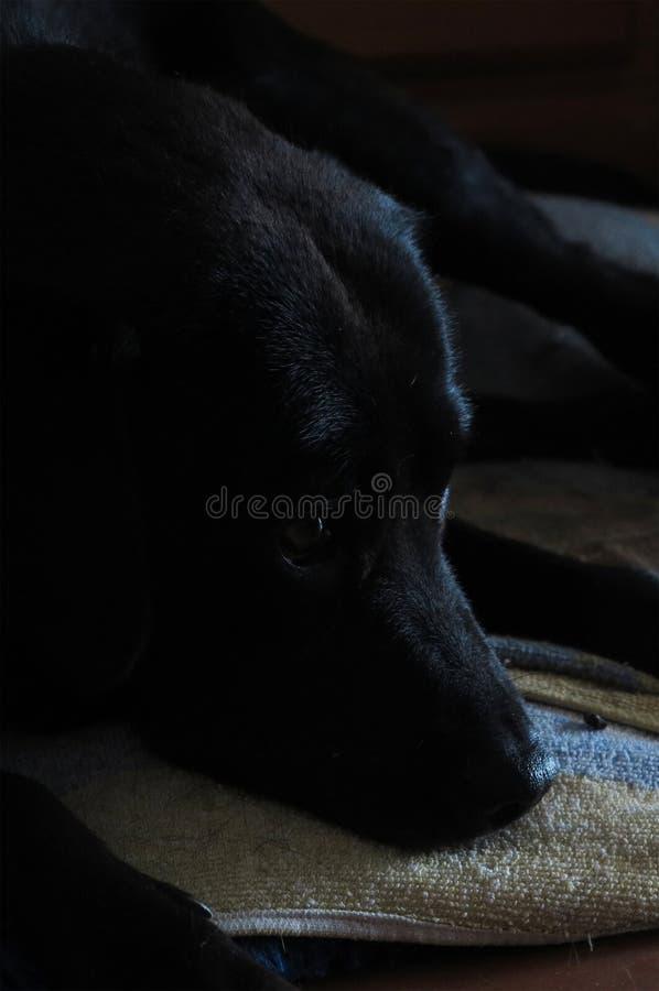собака ждать еду стоковые фото