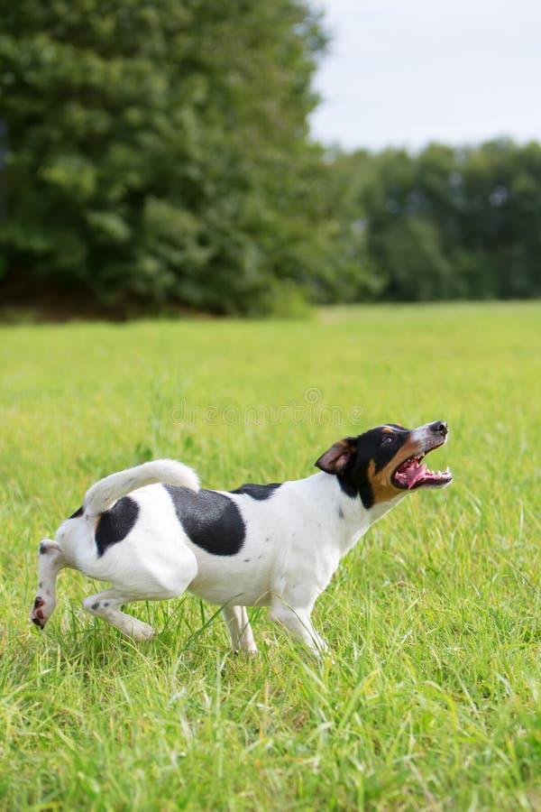 Собака ждет шарик стоковые фотографии rf