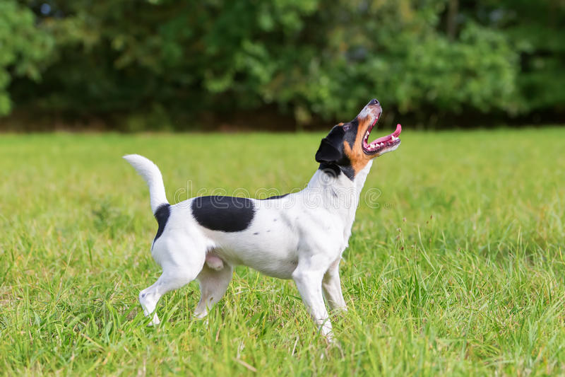 Собака ждет шарик стоковое фото rf