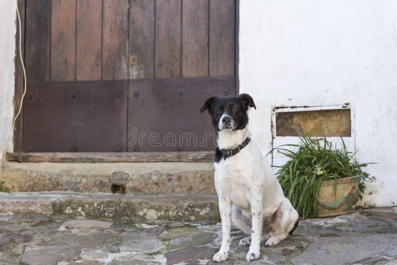 Собака защищает дом стоковое изображение