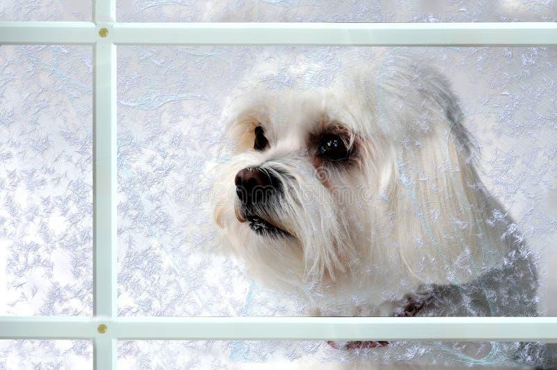 Собака за окном стоковые изображения rf