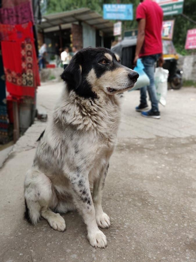 Собака зимы стоковое изображение