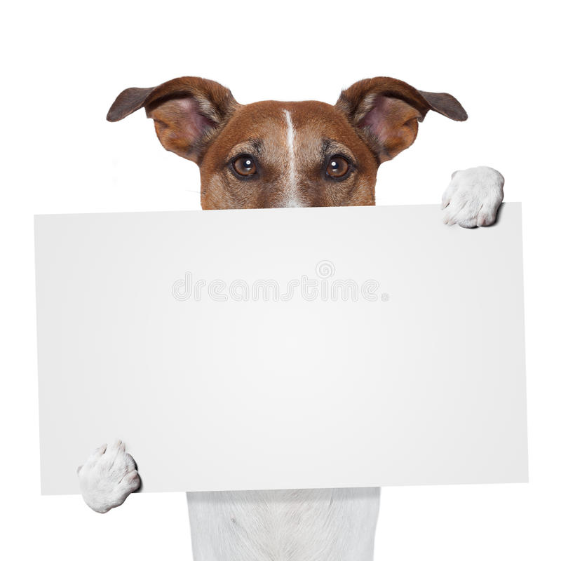 Собака знамени Placeholder стоковое фото rf