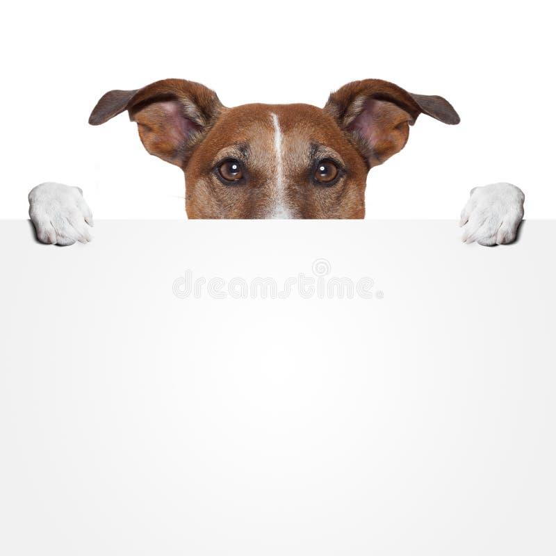 Собака знамени Placeholder стоковые изображения rf