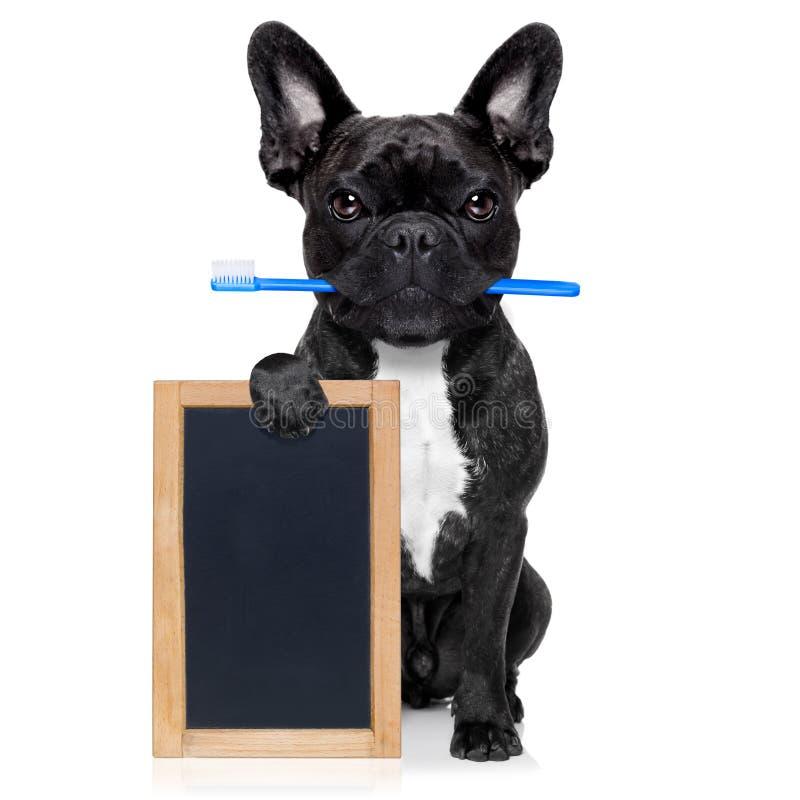 Собака зубной щетки зубов стоковое фото rf
