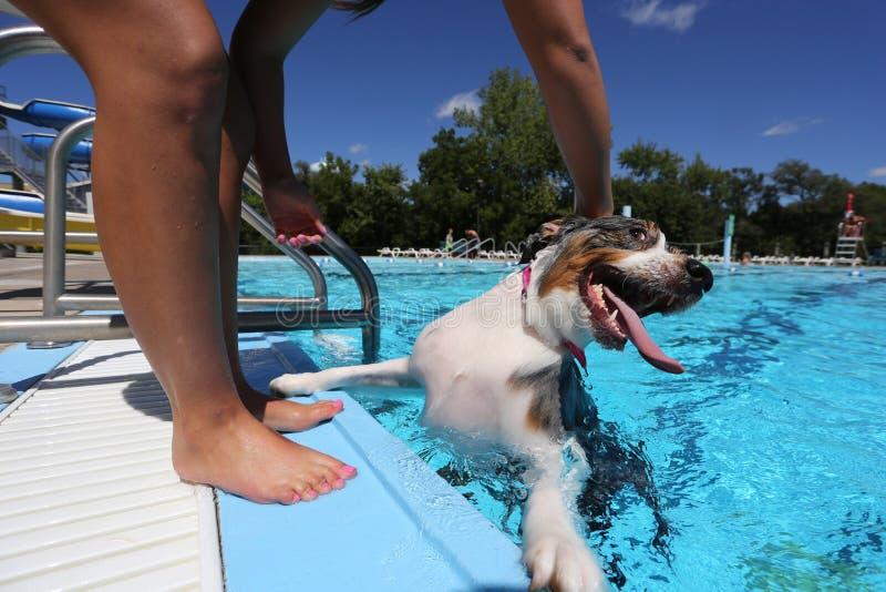 Собака играет с его владельцем на крае бассейна стоковое изображение