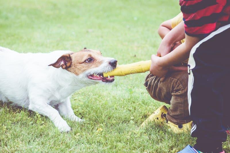 Собака играя игру перетягивания каната против 2 детей стоковые изображения rf