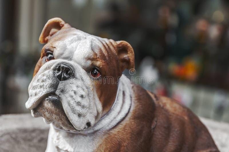 Собака игрушки бульдога Франции которая смотрит очень унылой стоковое фото