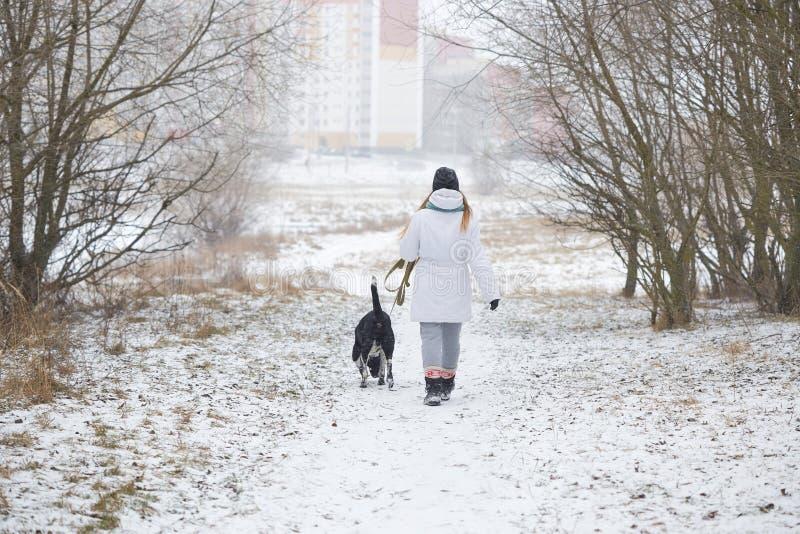 Собака идет на девушку поводка в зиме стоковые фото