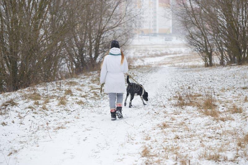 Собака идет на девушку поводка в зиме стоковое изображение rf