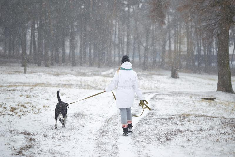 Собака идет на девушку поводка в зиме стоковые фотографии rf