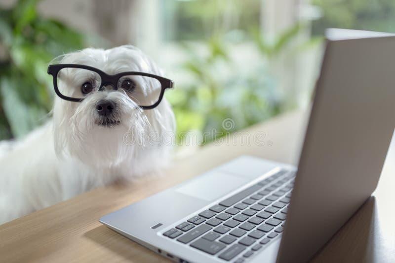 Собака используя портативный компьютер стоковые фото