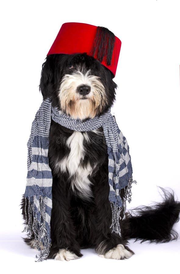 Собака ислама стоковые изображения