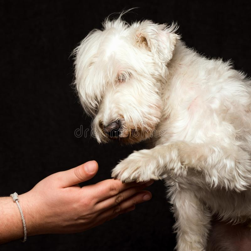 Собака и владелец приятельства стоковое изображение
