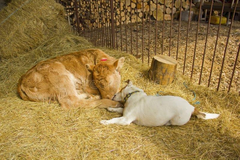 Download Собака и икра совместно стоковое изображение. изображение насчитывающей mammal - 41659015