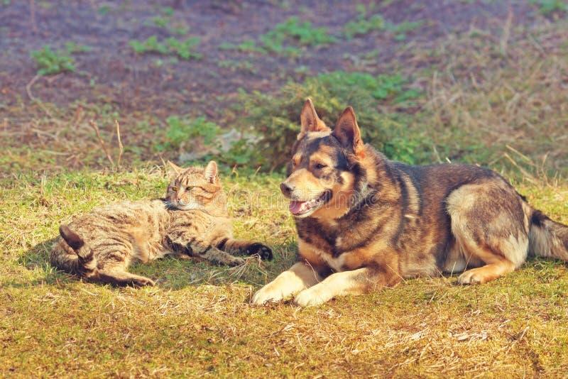 Download Собака и кот стоковое изображение. изображение насчитывающей adulteration - 41653283