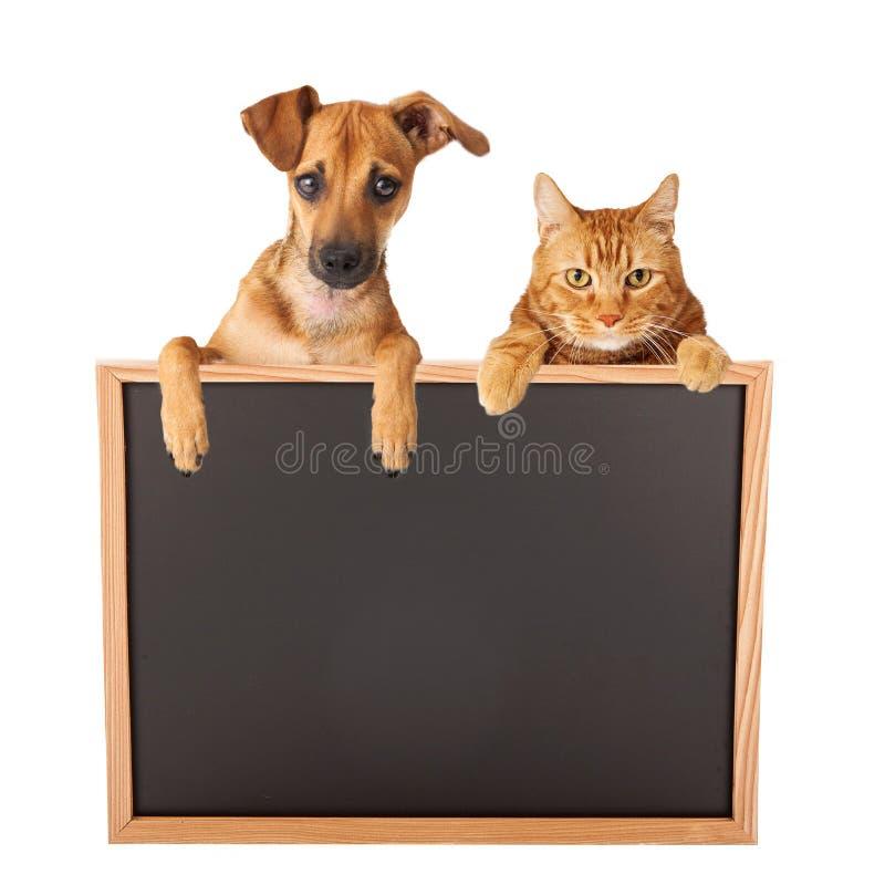 Собака и кошка над пустым знаком стоковое фото