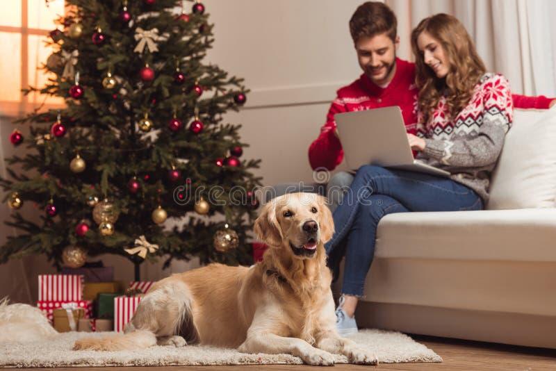 Собака и пары используя компьтер-книжку стоковая фотография rf