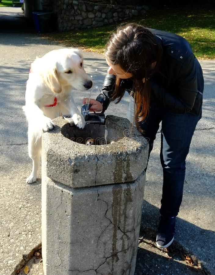 Собака и предприниматель на выпивая фонтане стоковые фото
