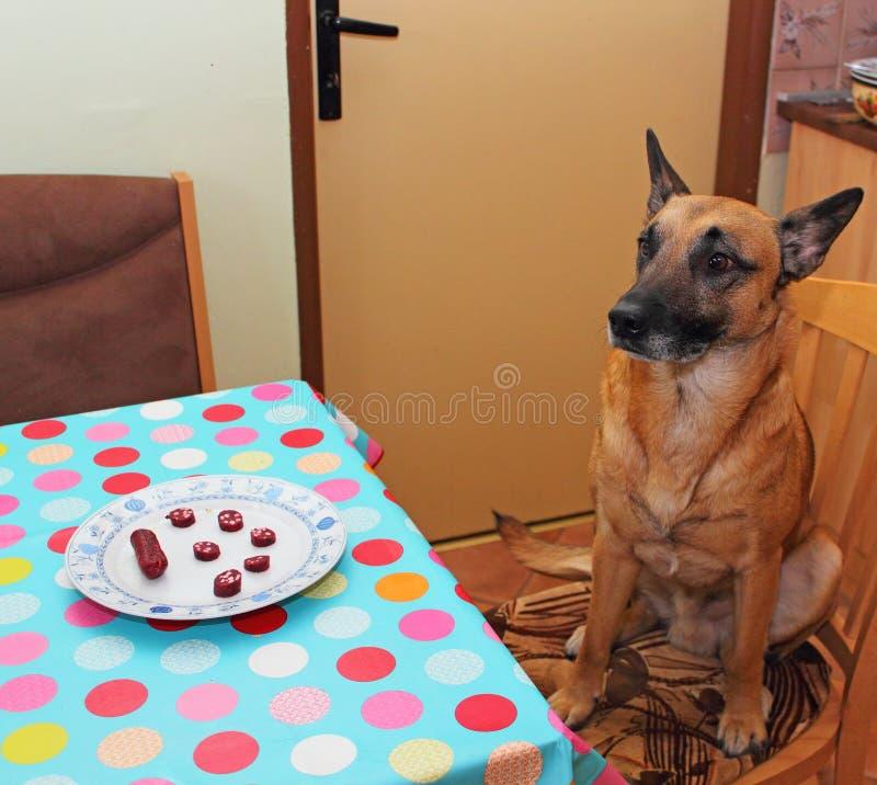 Собака и сосиска стоковые фотографии rf