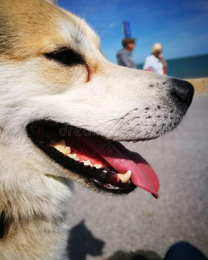 Собака и туристы стоковые фото