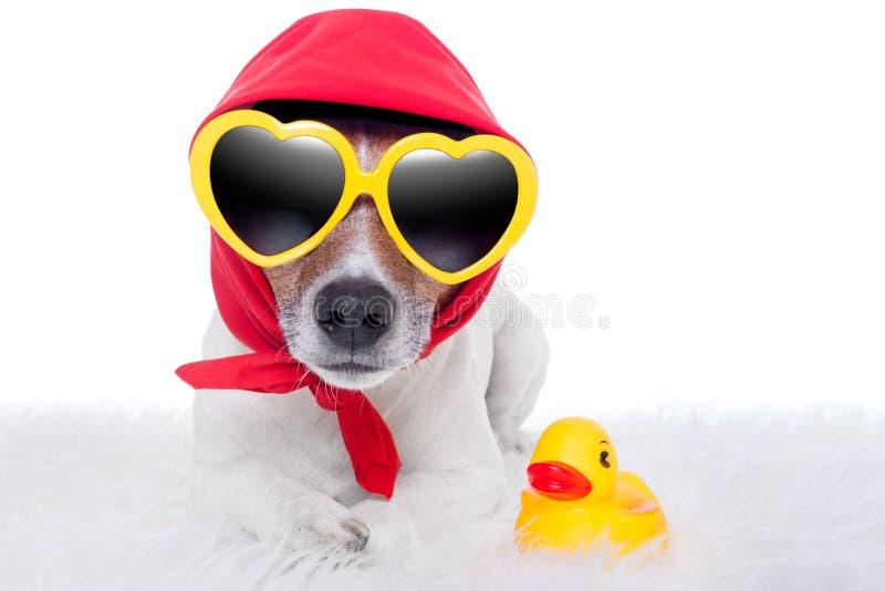 Собака и утка стоковые изображения