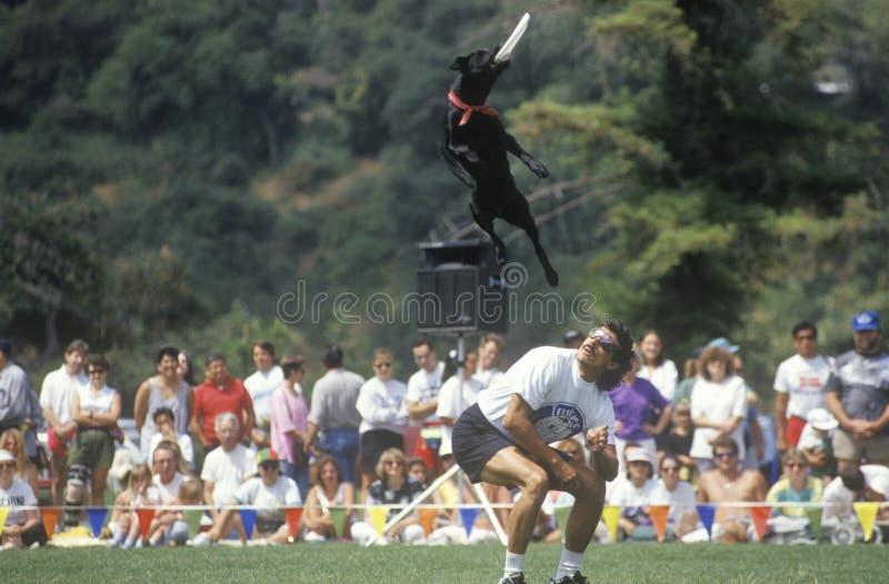 Собака и человек участвуя в Полу-выпускных экзаменах чемпионата мира собачьего состязания Frisbee, Rose Bowl, Пасадина, CA стоковые изображения