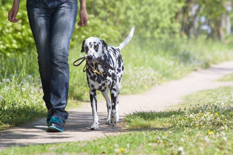 Собака идя с предпринимателем стоковое фото