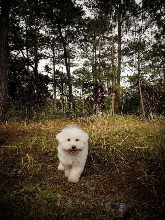 Собака как новый король джунглей стоковая фотография