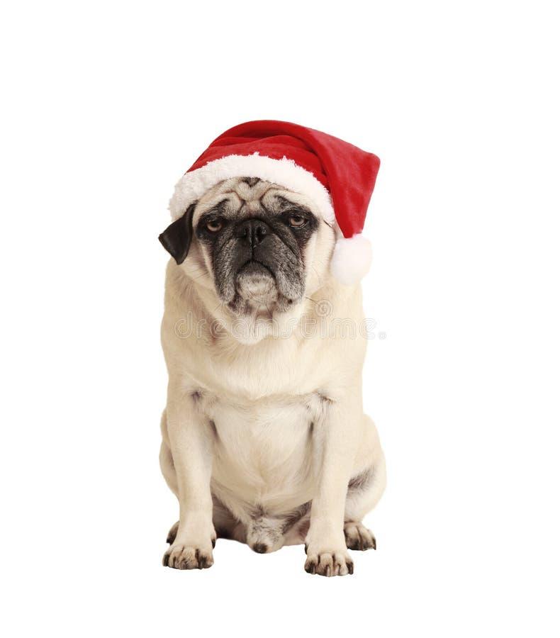 Собака как подарок рождества стоковое фото