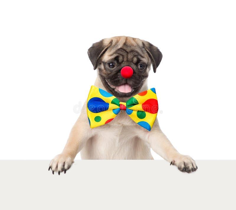 Собака клоуна peeking от задней пустой доски белизна изолированная предпосылкой стоковая фотография