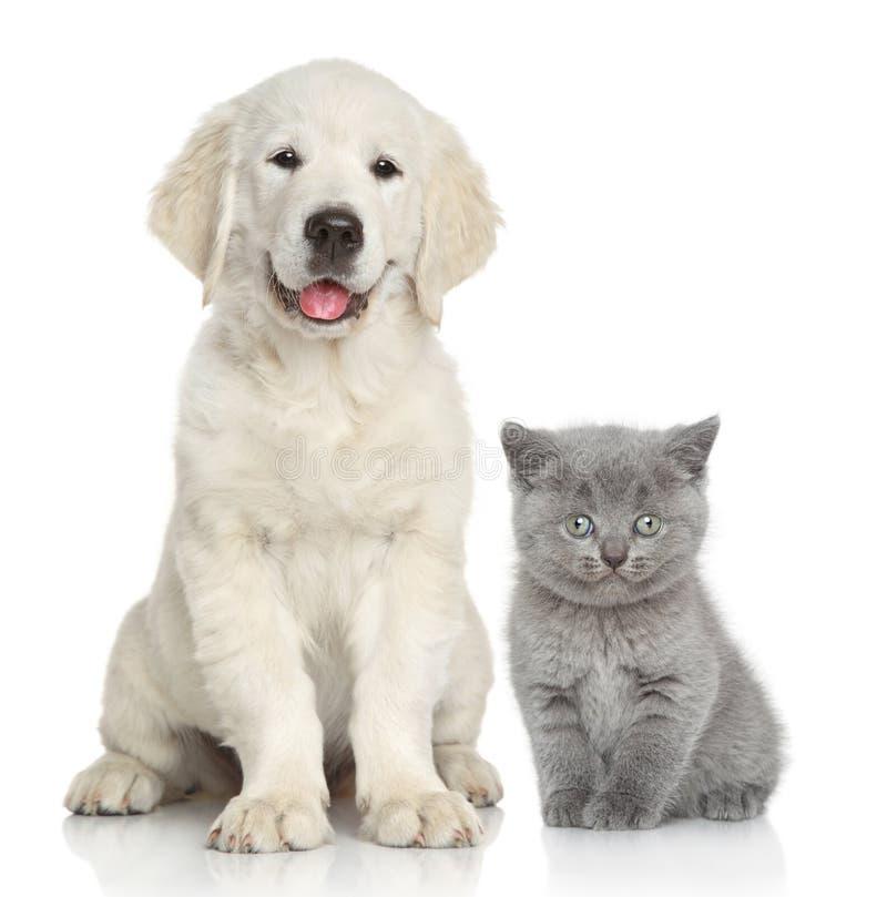 собака кота совместно стоковая фотография rf