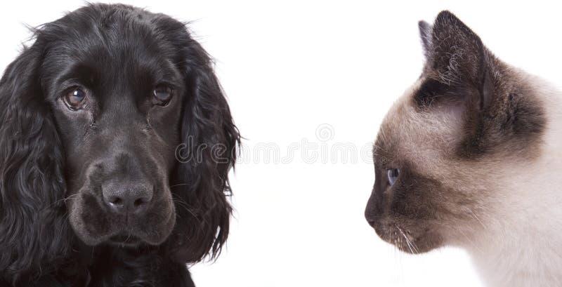 собака кота стоковые изображения