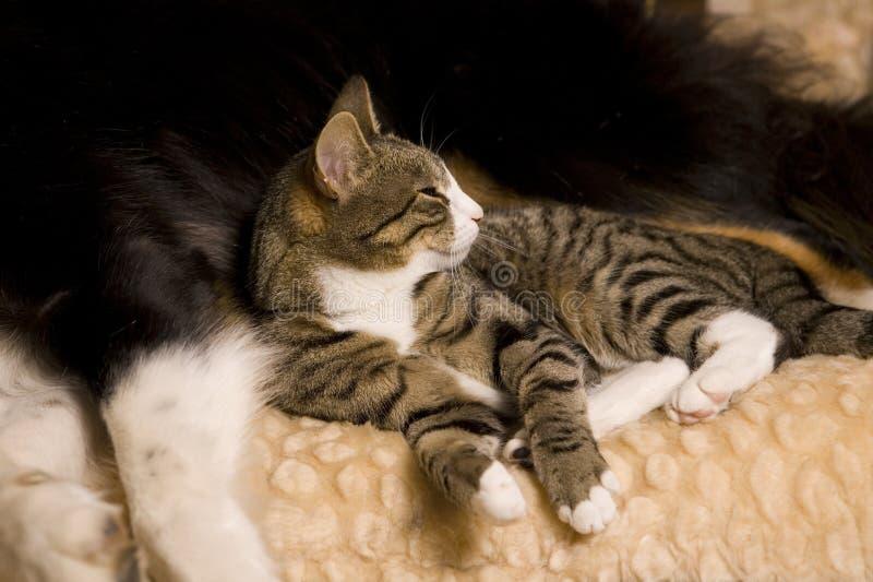 собака кота snuggled к вверх стоковое фото