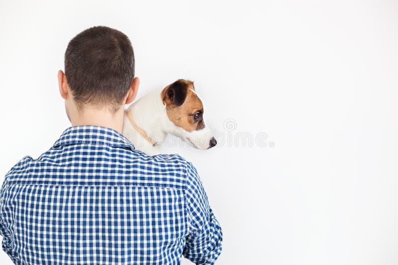 Собака лежит на плече своего владельца Терьер Джек Рассела в руках его владельца на белой предпосылке Концепция людей стоковое изображение