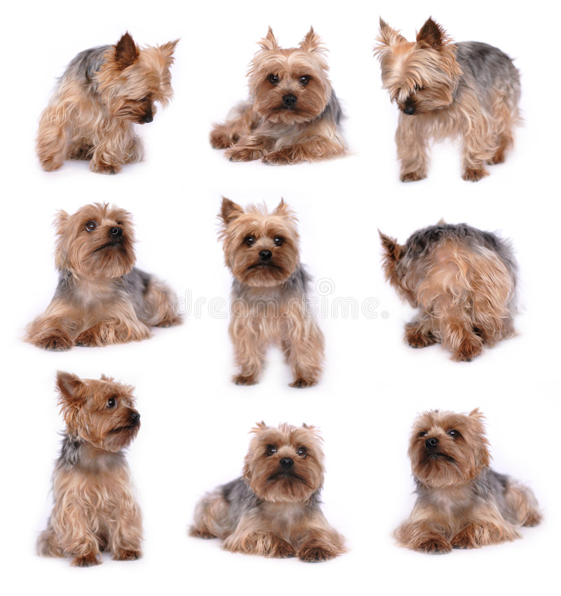 собака малая стоковое изображение rf