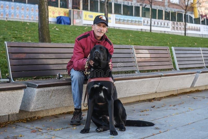 Собака Миры стоковая фотография rf
